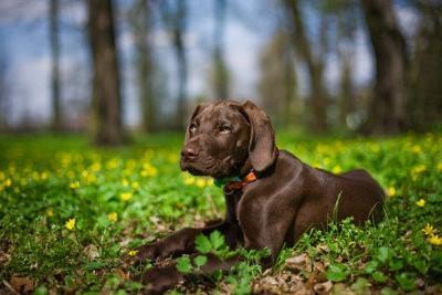 Retirer les tiques chez les chiens - de sorte que vous obteniez la bonne