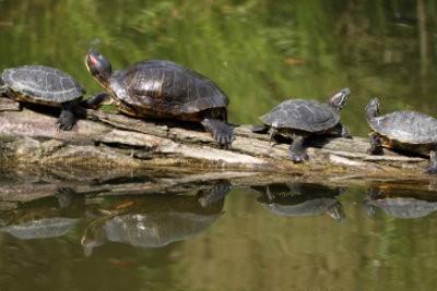 Les tortues ninja et leurs noms savoir sur la franchise - Le nom des tortue ninja ...