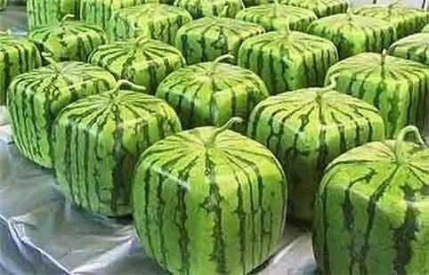 Comment faire pousser un watermelon place - Comment faire pousser un ananas ...