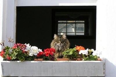 Bacs à fleurs décorent lui-même - comment cela fonctionne: