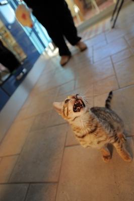 7 façons Mon chat est Just Like A Way Toddler & One ils diffèrent
