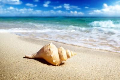 Rem de contre les puces de sable viter les piq res et soulager les d mangeaisons - Remede contre les puces de chat ...