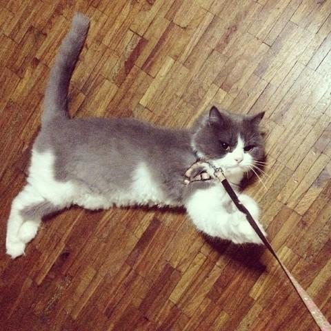 """10 chats qui sont totalement Over toute cette """"marche"""" Thing"""