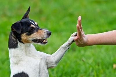 Les troubles dans le chien - de sorte que vous peut calmer à nouveau le chien