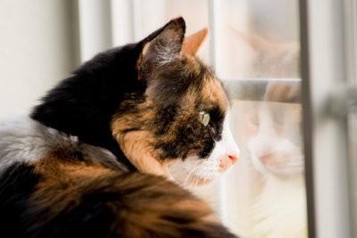 Fixez chat net avec des bâtons télescopiques - comment cela fonctionne: