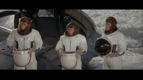 Evolution de la «Planète des singes de Ape