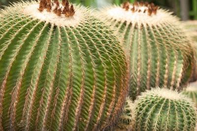 Costume Cactus tinker - comment cela fonctionne: