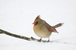 Quels sont les inconvénients de l'oiseau nourrir en hiver?  - En savoir plus