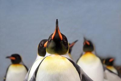 Assurez costume lui-même - Carnaval comme un pingouin