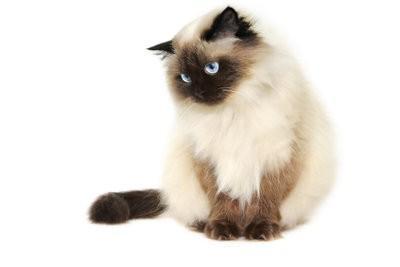 Cats Protection - garantir le droit balcon