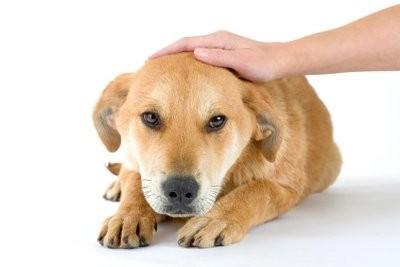Trouver des noms de chien allemands pour les chiens mâles - fonctionne de sorte que le choix du nom