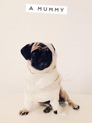 Tous les chiens vont Trick or Treating!  Un Pug à Six Costumes bricolage Facile