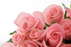 Assurez rosewater durable - donc vous économiser des produits de soins naturels de la peau de façon permanente