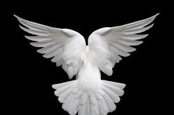 Pablo Picasso: The Dove - plus que juste une peinture