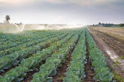 Agriculture biologique - avantages et les inconvénients expliqués brièvement