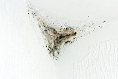 Mold derrière le papier peint - que faire?