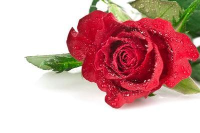 Pliez avec Origami Rose