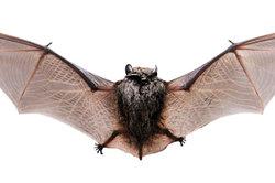 Bat Box - Instructions