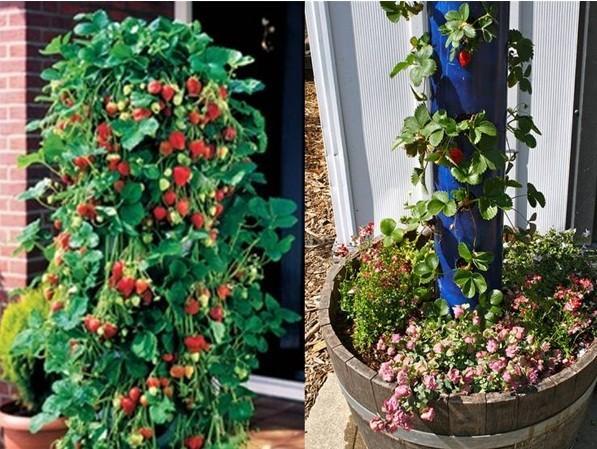 comment faire un tube vertical jardini re fraise. Black Bedroom Furniture Sets. Home Design Ideas