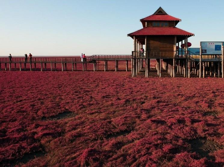 Plage Rouge Panjin, Chine