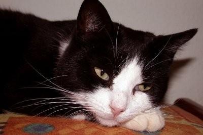 Gardez pages chat dédié?  - Pour se comporter correctement