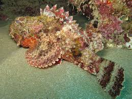 Top 10 des poissons les plus dangereuses dans le monde