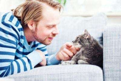 Ballonnements chez les chats - de sorte que vous peut aider