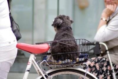 panier de chien pour le vélo - de sorte que vous pouvez voyager en toute sécurité avec votre chien