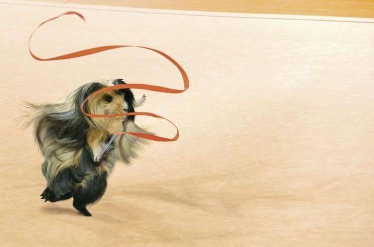 Guinée Pig Jeux Calendrier 2013