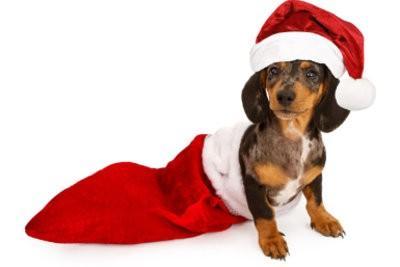 biscuits de chien pour Noël à faire vous-même