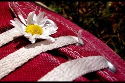 Neon mandrins de roses - donc vous combinez les chaussures tendance correctement