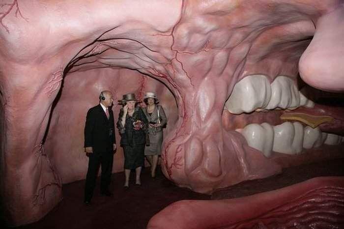 Extrêmement Musée Corpus en Hollande - Un voyage à travers le corps humain  NH86