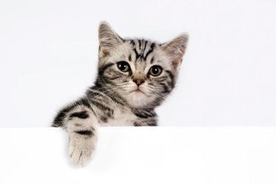 Petit chat ne mange pas - si le régime réussit tout de même