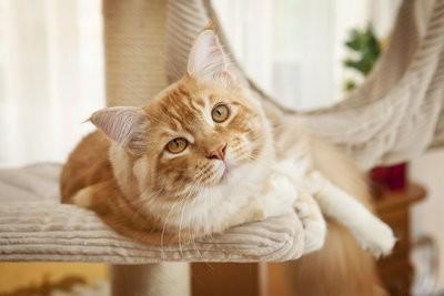 Construire griffoir pour chats eux-mêmes - comment cela fonctionne: