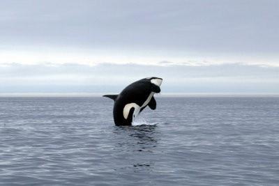 L'observation des baleines en mer du Nord - Les clés du succès observation des baleines