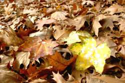 photos d'automne pour l'artisanat - Idées